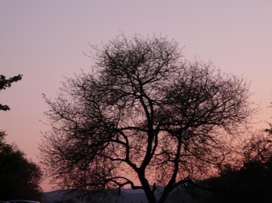 un arbre rose?